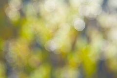 Defocus of green lights Stock Photography
