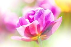 Defocus härlig rosa färgblomma. abstrakt design Arkivfoto