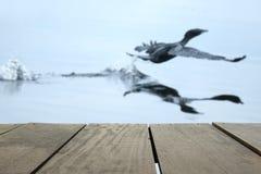 Defocus i plama wizerunek tarasowy drewno i Latający ptaki w jeziorze Zdjęcia Stock