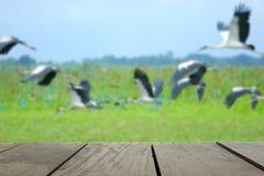 Defocus i plama wizerunek tarasowy drewno i Latający ptaki w s Obrazy Stock