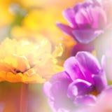 Defocus mooie bloemen royalty-vrije stock afbeelding