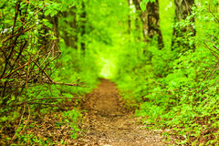 Defocus path in green forest Stock Photos