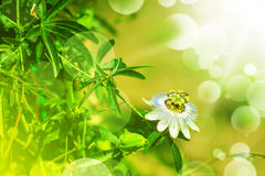 Beautiful tropical flower outdoor Royalty Free Stock Photos