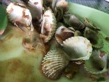 Defocus Shell entassent photographie stock