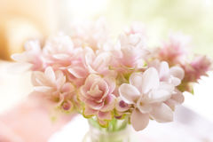 Defocus and soft focus pink blossom for floral background. Defocus and soft focus pink blossom, delicate floral background with copy space Royalty Free Stock Photo