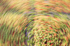Defocus spinning blurred of flower with a colorful radial blur Stock Photography