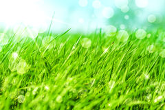 Abstract nature background in defocus. Defocus Spring or summer abstract nature background with grass in the meadow and blue sky in the back Royalty Free Stock Images