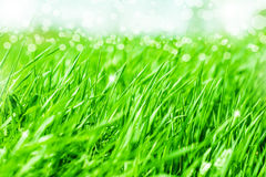 Abstract nature background in defocus. Defocus Spring or summer abstract nature background with grass in the meadow and blue sky in the back Stock Photos