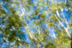 Defocus tree Stock Photos