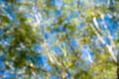Defocus tree. It is defocus scene for background Stock Photos
