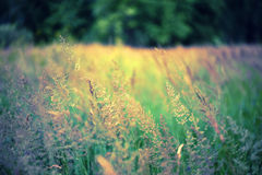 Defocus-Unschärfeschöner Blumenhintergrund. Stockbild
