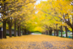 Defocus of yellow ginkgo leaves tunnel park autumn Stock Photo
