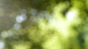 Defocused自然背景 被弄脏的叶子森林 股票视频