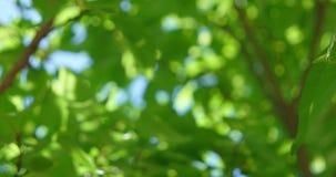Defocused листья в солнечном дне сток-видео