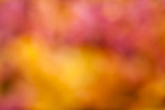 Defocused abstract colorful background Royalty Free Stock Photos