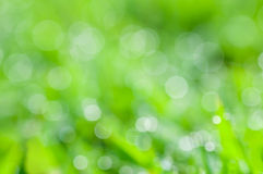 Defocused abstract fresh green natural background Stock Image
