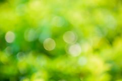 Defocused abstract nature background with bokeh lights. Royalty Free Stock Photo
