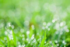 Defocused abstrakcjonistyczny świeży zielony naturalny tło zdjęcia stock