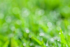 Defocused abstrakcjonistyczny świeży zielony naturalny tło obrazy stock