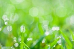 Defocused abstrakcjonistyczny świeży zielony naturalny tło fotografia stock