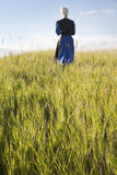 Defocused Amish woman walking in a field. A defocused Amish woman walking in a field of grass Royalty Free Stock Image