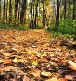 Defocused autumn alley Stock Image