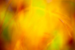 Defocused autumn colors. Abstract defocused grass against autumn leaf colors background Stock Photos