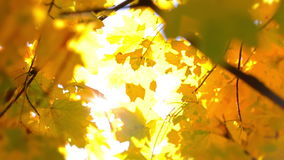 Defocused Autumn Leaves and Sun stock video footage