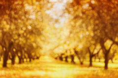 Defocused autumn park or garden for bokeh background. Blurred alley trunk of trees. Autumnal parkland. Royalty Free Stock Photography