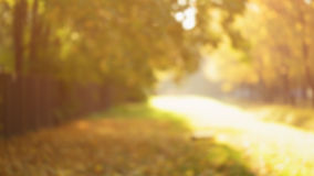 Defocused background of autumn time Stock Image