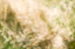 Defocused background with grass theme Royalty Free Stock Image