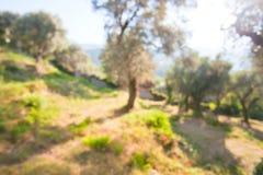 Defocused background of olive grove Stock Photo