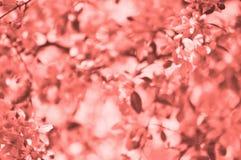 Defocused bakgrund för korallfärgbokeh Rosa inspiration fotografering för bildbyråer