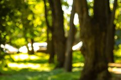 Defocused Bild eines Waldes mit Sonnenschein- und Grünblättern Auszug blured Hintergrund Lizenzfreie Stockfotografie