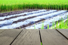 Defocused and blur image of terrace wood and agriculture life fo Royalty Free Stock Image