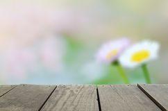 Defocused and blur image of terrace wood and Green daisy garden. In morning time for background usage Stock Images