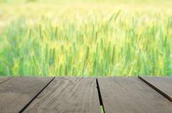 Defocused and blur image of wood terrace Barley rice field Stock Image
