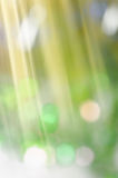 Defocused blurred Christmas lights background Royalty Free Stock Photo
