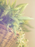 Defocused of blurred fern leaves with sun flare Royalty Free Stock Photo
