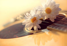 Defocused blurry sunny photo of acoustic guitar and white flower Stock Photos