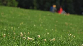 Defocused couple in blue and red clothes having picnic on the grass in city park. 4K background bokeh shot. Defocused couple in blue and red clothes having stock video
