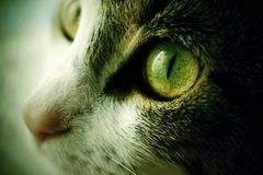 Defocused detail photo of feline face. Royalty Free Stock Photos
