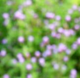 Defocused flower background color Royalty Free Stock Image