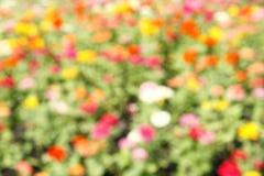 Defocused flower in blurred Stock Images