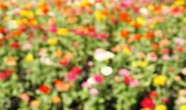 Defocused flower in blurred Stock Image