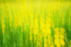 Defocused flowers and grass for background. Blurred and de focused fresh yellow blossom and green stalks Stock Photography