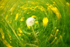 Defocused flowers and grass in circle background. Blurred and de focused yellow blossom and green grass Stock Photography