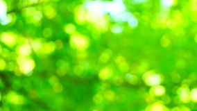Defocused forest with bright sunlight.Nature background. Beautiful Sun shine through the blowing on wind tree green leaves. Blurred abstract bokeh stock video