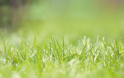 Defocused grass on field Royalty Free Stock Photography