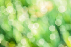 Defocused green gras background. In morning Royalty Free Stock Image